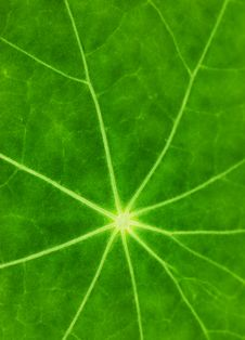 Free Green Leaf Texture Royalty Free Stock Images - 5971589