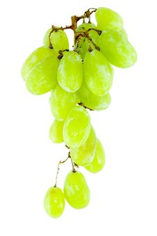 Free Bunch Of Grapes Royalty Free Stock Image - 5971866