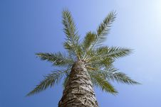Free Palm Tree Stock Image - 5972191