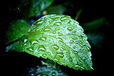 Free Rained On Stock Photos - 5972233