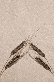 Free Old Grunge Sepia Paper With Ears Stock Photo - 5973440