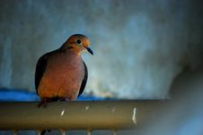 Free Bird Stock Images - 5973574