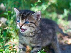 Free Kitten Royalty Free Stock Photos - 5973638