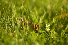 Free Butterfly Sitting In Grass Royalty Free Stock Photography - 5974787
