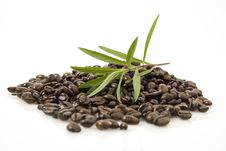 Free Coffee Beans Stock Images - 5975264