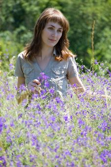 The Girl Collects Wild Flowers Stock Image