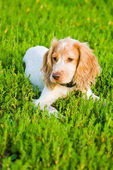 Free Amusing Dog Stock Photography - 5976662