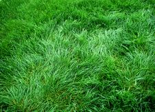 Free Grass Royalty Free Stock Photos - 5976808