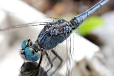Free Dragonfly Stock Photography - 5978242