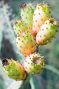 Free Prickly Pears Stock Photo - 5978570