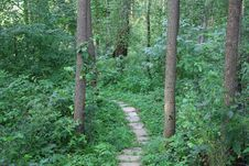 Free Wood Path Stock Image - 5979021
