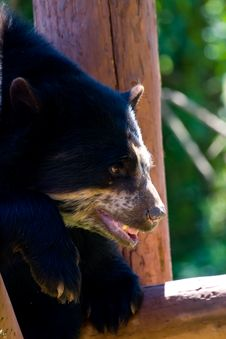 Free Bear Stock Photo - 5979230
