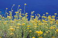 Free View The Sea Through Field Flowers Stock Photo - 5980120