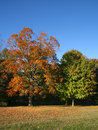 Free Autumn Trees Stock Photography - 5984022