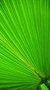 Free Palm Leaf Stock Image - 5986821