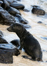 Free Baby Sea Lion Stock Images - 5987164