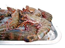 Big Sea Tiger Prawns Tray One Stock Photo