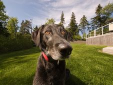 Free Dog In Garden Royalty Free Stock Photos - 5981848