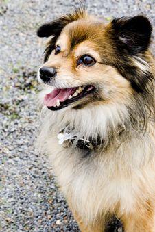 Free Dog Royalty Free Stock Photography - 5982177