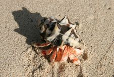 Hermit Crab Crawling Through Sandy Beach Stock Photo