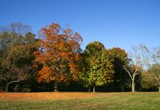 Free Autumn Trees Royalty Free Stock Photography - 5983727