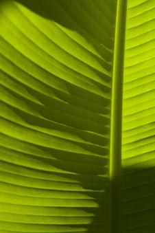 Free Banana Leaf Stock Image - 5983821
