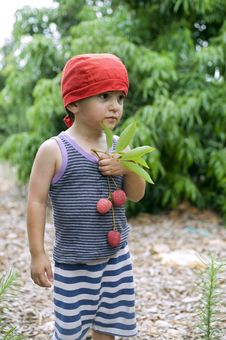 Young Boy And Lychee Stock Image