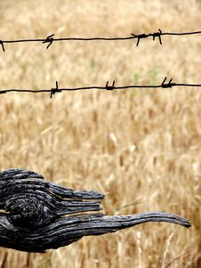 Free Palisade And Wheat Field Stock Photos - 5984043
