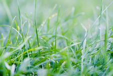 Free Green Grass Royalty Free Stock Images - 5984159