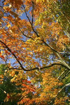 Free Autumn Leaves Royalty Free Stock Photos - 5984208