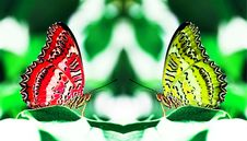 Free Red And Yellow Butterflies Royalty Free Stock Photos - 5985438