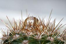 Water Drop On Cactus Stock Photo