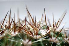 Water Drop On Cactus Royalty Free Stock Photos