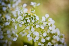 Free Blossom With Small Flowers Royalty Free Stock Image - 5986296