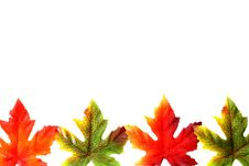 Free Autumn Leaves Stock Images - 5986374