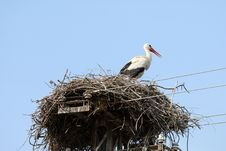 Free Stork In Nest, Branch Made Royalty Free Stock Images - 5986439