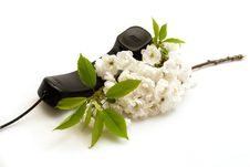 Free Cherry Flowers And Telephone Handset Royalty Free Stock Photos - 5987978