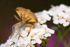 Free Beautiful Bug Stock Photography - 5988422