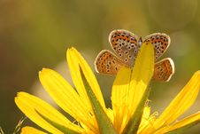 Free Butterfly Royalty Free Stock Image - 5988696