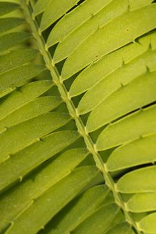 Free Detail Of Leaf Royalty Free Stock Image - 5989106