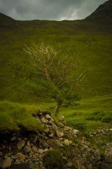 Free Lonely Old Tree Royalty Free Stock Photo - 5989945