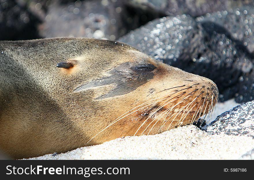 Unique Sea Lion