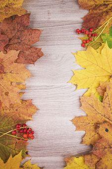 Free Autumn Maple Leaves Royalty Free Stock Photos - 59829998