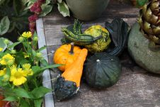 Free Pumpkins On A Wooden Box With Flowers Stock Images - 59847594