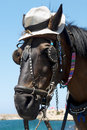 Free Curious Horse In Light Hat Royalty Free Stock Photos - 5993168