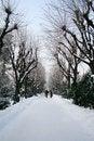 Free Winter Stock Photos - 5993843
