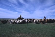 Nomads Shepherd Stock Image