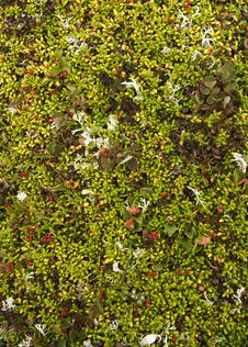 Moss Background With Cowberries Royalty Free Stock Photography