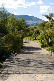 Brick Walkway Through A Garden