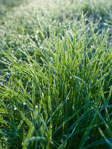 Free Frozen Grass Stock Photos - 5993053